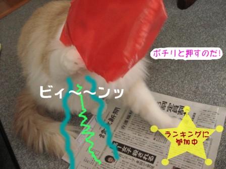 コピー ~ IMG_6953.JPG