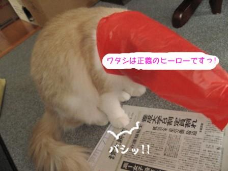 コピー ~ IMG_6956.JPG