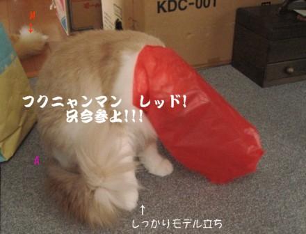 コピー ~ IMG_6960.JPG