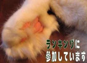 コピー ~ IMG_6992.JPG