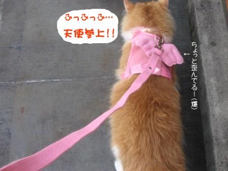 コピー ~ IMG_7860.JPG