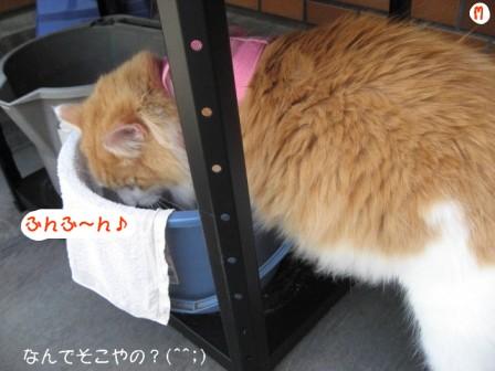 コピー ~ IMG_7870.JPG