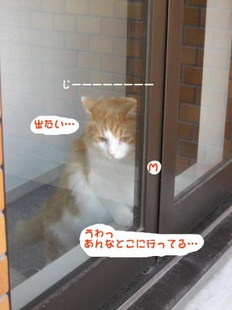 コピー ~ IMG_7888.JPG