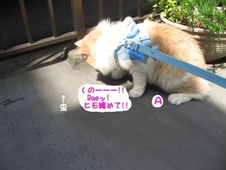 コピー ~ IMG_7905.JPG