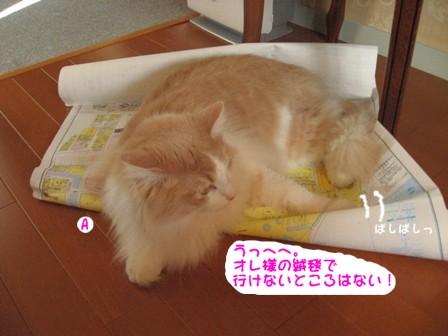 コピー ~ IMG_9250.JPG