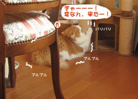 コピー ~ IMG_9251.JPG