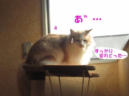 コピー ~ IMG_9256.JPG