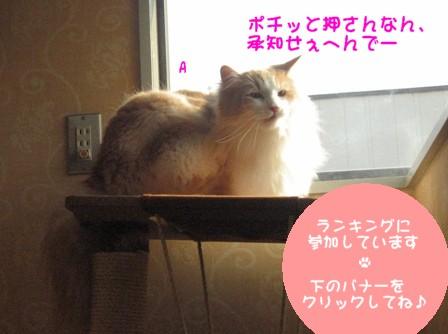 コピー ~ IMG_9257.JPG