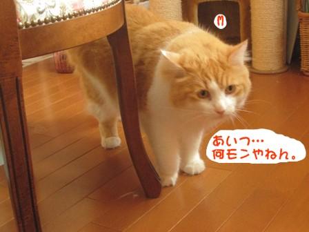 コピー ~ IMG_9267.JPG