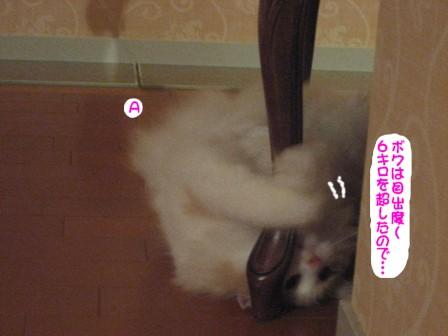 コピー ~ IMG_9844.JPG