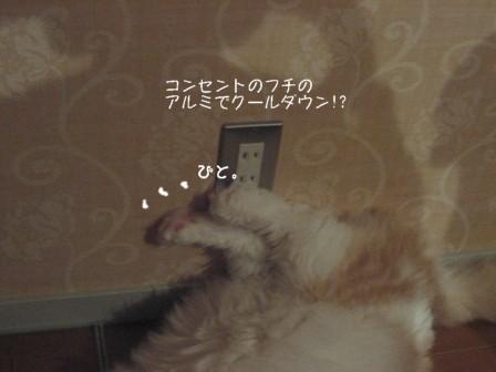 コピー ~ IMG_9922.JPG