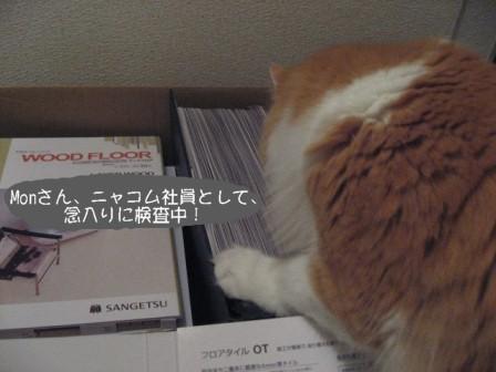 コピー ~ IMG_9927.JPG