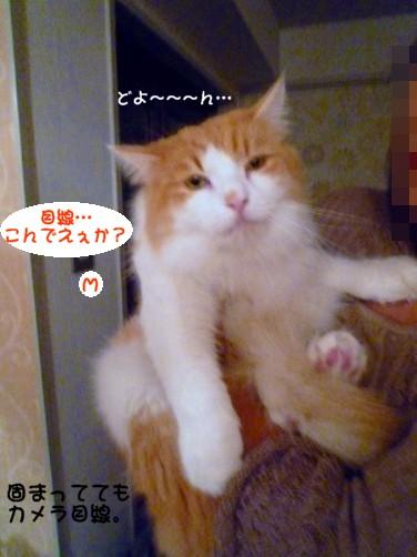 コピー ~ s-013.jpg
