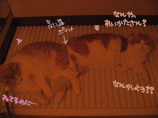 フロフタ床暖.JPG