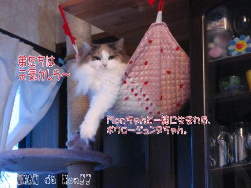 ポーちゃん.JPG
