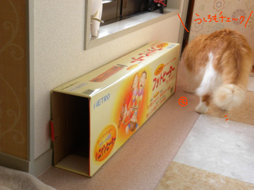 モンモンの箱活動4.JPG