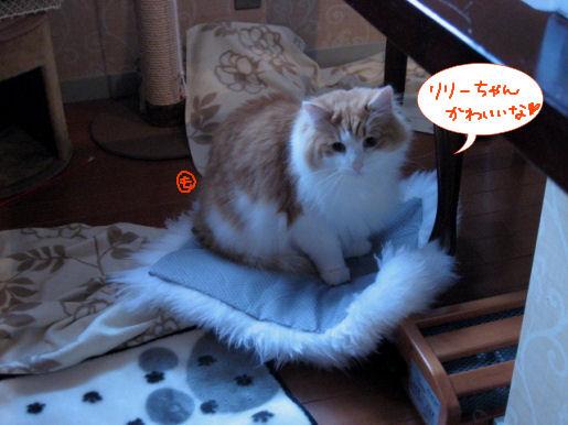 リリーちゃんは美猫.JPG