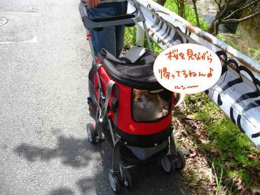 帰り道に花見.JPG