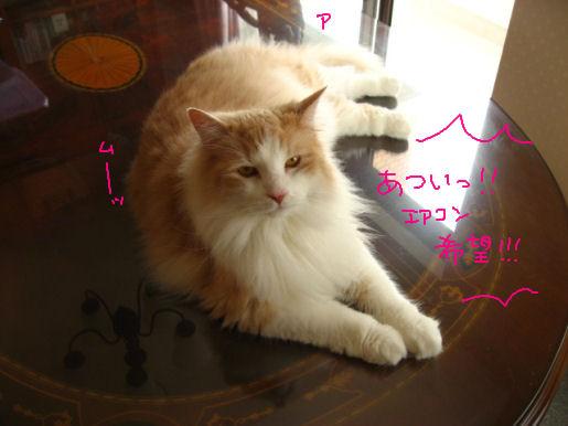 暑い!!エアコン!!!.JPG