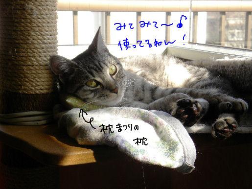 枕まつり最高.JPG