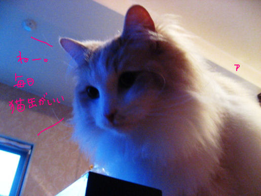 毎日猫缶希望.JPG