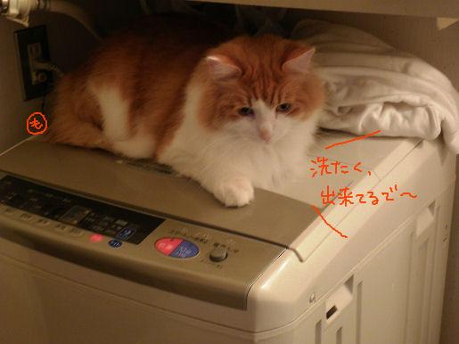 洗濯できてます.JPG
