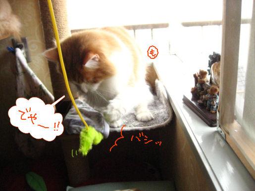 猫パンチ.JPG