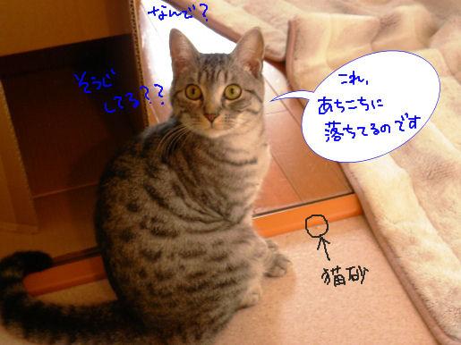 猫砂.JPG