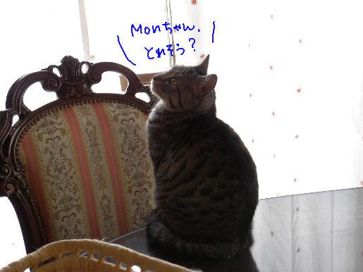 Monちゃん、いける?.JPG